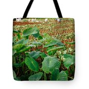Yams Farm In Azores Tote Bag