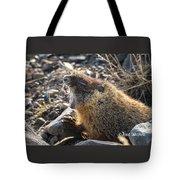 Yawning Marmot Tote Bag