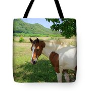 Yearling Colt In The Pasture Tote Bag