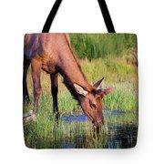 Yearling Elk Tote Bag