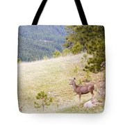 Yearling Mule Deer In The Pike National Forest Tote Bag