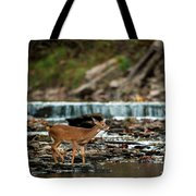 Yearling On Indian Creek Tote Bag