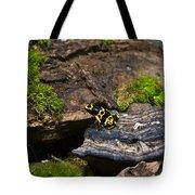 Yellow And Black Dart Frog Tote Bag