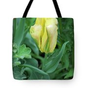 Yellow And Green Striped Tulip Flower Bud Tote Bag