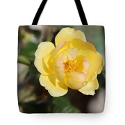 Yellow And Pink Tipped Rose Tote Bag