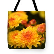 Yellow And Red Autumn Mums Closeup I Tote Bag