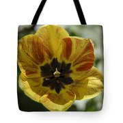 Yellow And Red Tulip Center Squared Tote Bag