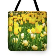 Yellow And White Tulips In Canberra In Spring Tote Bag