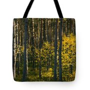 Yellow Autumn Trees In Forest Tote Bag