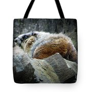 Yellow Bellied Marmot - Glacier National Park Tote Bag