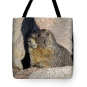 Yellow-bellied Marmot Poses For Pictures Tote Bag