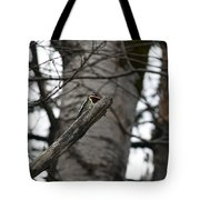 Yellow-bellied Sapsucker Tote Bag