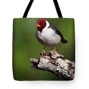 Yellow-billed Cardinal Tote Bag