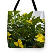 Yellow Poppy Bush Flowers At Pilgrim Place In Claremont-california Tote Bag