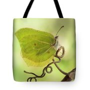 Yellow Butterfly On The Branch Tote Bag