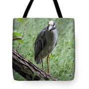 Yellow-crowned Night Heron 2 Tote Bag
