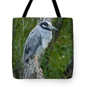Yellow-crowned Night Heron 4 Tote Bag