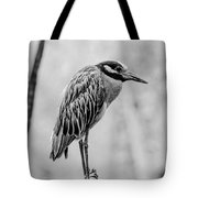 Yellow-crowned Night Heron Black And White Tote Bag