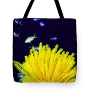 Yellow Feather Star Tote Bag