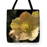 Yellow Helleborus Tote Bag
