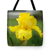 Yellow Iris Flowers Art Prints Cards Irises Summer Garden Landscape Tote Bag