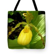 Yellow Lady's Slipper Tote Bag