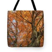 Yellow Maple Tree Tote Bag
