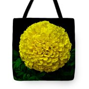 Yellow Marigold Flower On Black Background Tote Bag