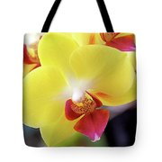 Yellow Phalaenopsis Orchids Tote Bag