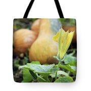 Yellow Pumpkin Flower Closeup Garden Autumn Season Tote Bag