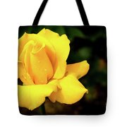 Yellow Rose - After The Rain Tote Bag