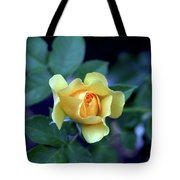 Yellow Rose With Purple Contrast 0357 H_2 Tote Bag