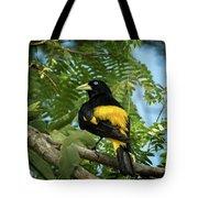 Yellow Rumped Cacique Tote Bag