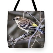 Yellow-rumped Warber In Fall Colors Tote Bag