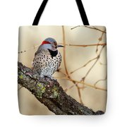Yellow-shafted Northern Flicker Tote Bag