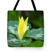 Yellow Trillium Flower Trillium Luteum Tote Bag