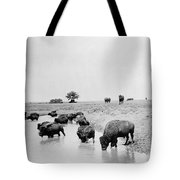 Yellowstone: Bison, C1905 Tote Bag