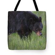 Yellowstone Black Bear Grazing Tote Bag