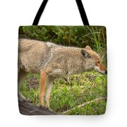 Yellowstone Coyote Scout Tote Bag