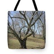Yellowwood Tree In Winter Tote Bag