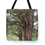Yew Tree Entrance Tote Bag