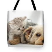 Yorkshire Terrier And Tabby Kitten Tote Bag