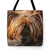 Yorkshire Terrier Biting Wood Tote Bag