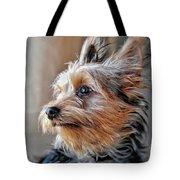 Yorkshire Terrier Dog Pose #2 Tote Bag
