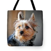 Yorkshire Terrier Dog Pose #3 Tote Bag