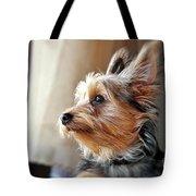 Yorkshire Terrier Dog Pose #5 Tote Bag