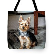 Yorkshire Terrier Dog Pose #6 Tote Bag