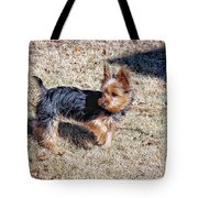 Yorkshire Terrier Dog Pose #9 Tote Bag
