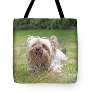 Yorkshire Terrier Is Smiling At The Camera Tote Bag