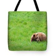 Yosemite Bear Tote Bag